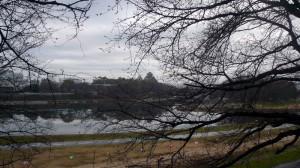 蕾がふくらみけた桜と小雨の風景